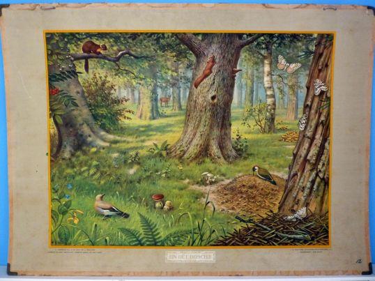 In-het-bosch