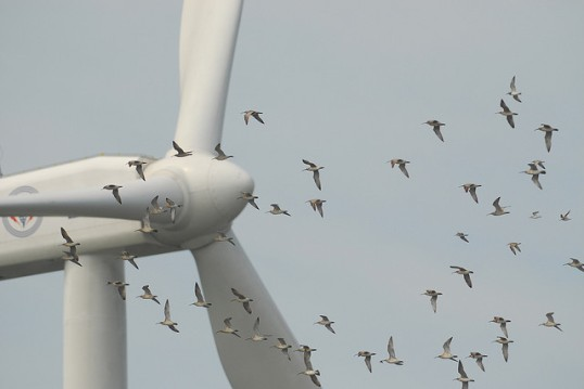 wind-turbine-and-birds-changhua-coast-cons-act
